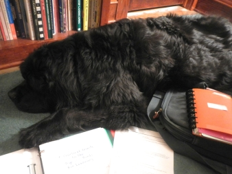 Canine assistant 2
